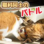 タイガーの社員とヤマトの配達員が出会い頭に衝突!(他5本)【ボケてまとめ】