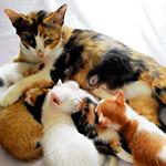 寒波に備えてモスクへやってきた猫の親子にほっこり(他4本)【ツイッターまとめ】