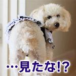 火サスみたい…階段から落ちた相手を見て悪そうな顔をする犬