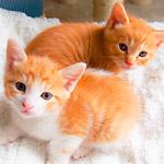 幼稚園児、ウサギの真似、毛布にフミフミ…癒やされる子猫動画3本立て!