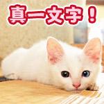 新幹線のように見事な真一文字で寝そべる猫「だいずちゃん」が可愛い