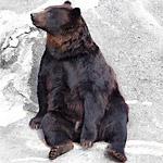 カナダのゴミ捨て場のソファでくつろぐクマが激写される!