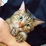 地震に怯えた猫が足にしがみついて離れない動画が可愛すぎる!
