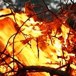 カリフォルニアの山火事エリアで内側から燃える木が発見される
