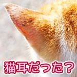 ヤマトの不在票のギザギザで作った猫耳動画がすごい!尻尾が動いたり運転したり