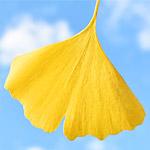 イチョウの葉で蝶を作った動画がすごい!簡単ですぐ試せる草花遊び