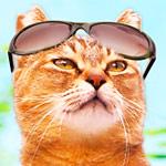 ねこの写真ヘタクソ選手権 おもしろ猫画像集まとめ