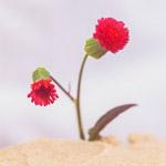 米ユタ州の砂漠地帯で咲く花が、この世の終わりみたいに幻想的