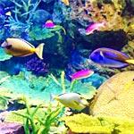 Twitter映えする水族館を見つけた!ザリガニや魚がSNSで会話