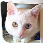 Googleストリートビューに写った変な白い猫のコスプレした人がいたw