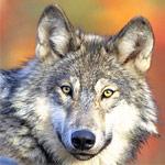 オオカミ犬の子が襲来してきた!体を10匹に甘噛みされてハーレム状態