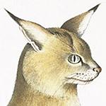 田辺誠一が猫をスケッチした結果、斬新すぎる絵柄になって笑ったw
