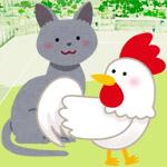 猫とニワトリのちゅ~るに対する仁義なき戦いの動画が熱い!