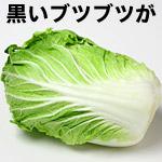 白菜の黒いブツブツは病気?食べられる?白菜についたゴマ症とは