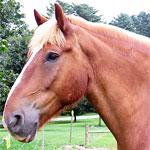 エポナの歌を口笛で吹くと駆け寄ってくる馬の動画がすごい!