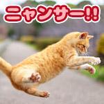 飛び猫にFGOのランサーの槍を持たせたらかっこよくなった!