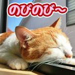 窓枠で寝ている猫、レール部分にぴったりハマっていて可愛すぎ!