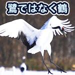 警察の詐欺防止ポスターに描かれていた鳥が鷺ではなく鶴だった
