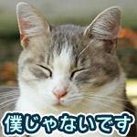 植木鉢を倒した猫が椅子の下で死んだフリする動画が面白いw