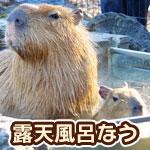 静岡のニュース番組でアナウンサーが若者言葉で話していて面白いw