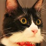 テレビの裏で急に体が伸びた胴長の猫動画にびっくり!