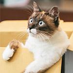 入れる物には入る猫が反則級の可愛さ!箱でも長靴でも何でも入る!