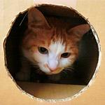 箱に描かれた猫の顔をぶち破って本物の猫が出てきた動画にびっくり!