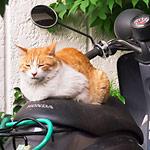 バイクを汚していた老猫に困っていた所、座布団を敷いて平和解決!