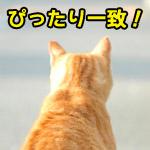 日馬富士の顎にぴったりハマる猫がミラクル!頭が顎の形と完全一致