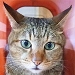 猫生でカメラ落としたら別の猫の顔が奇跡的に映って笑ったw