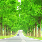 滋賀県高島市の四季のメタセコイア並木が感動するほど美しい!