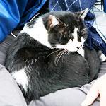 飼い主に怒られて膝に乗らなくなった猫が最期にお願いしてきた話に号泣