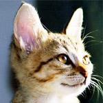 猫のあごやお腹、耳フェチにはたまらない動画が可愛すぎる!