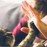 たった15ヶ月で凄腕トレーダーみたいに…写真から伝わる猫と人の成長記