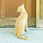 お店のドアの前で居座って威力業務妨害している猫が可愛い!